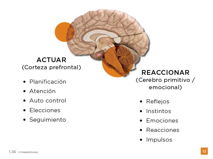 cerebro-productividad